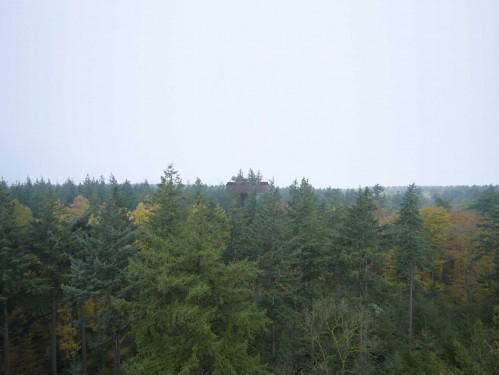 TorreForestal