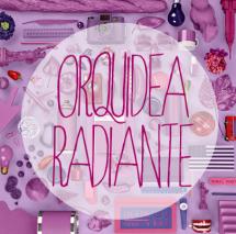 orquidea-radiante5