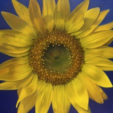 FLOWER SERIES 11