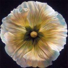 FLOWER SERIES 14p