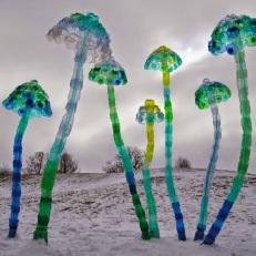 veronika-richterova-meduse