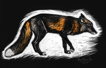 cross-fox-scratchboard-color