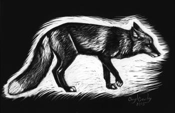 cross-fox-scratchboard