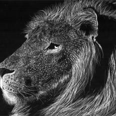 lion_scratchboard_by_andoledius