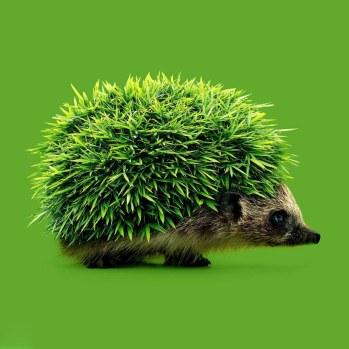 08.randy-lewis-fotografias-surrealistas-big