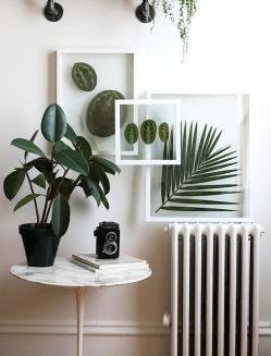 DIY-Pressed-Plants