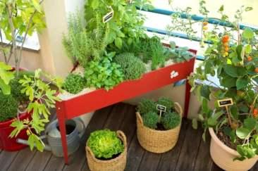 10335191-potager-balcon-botanic
