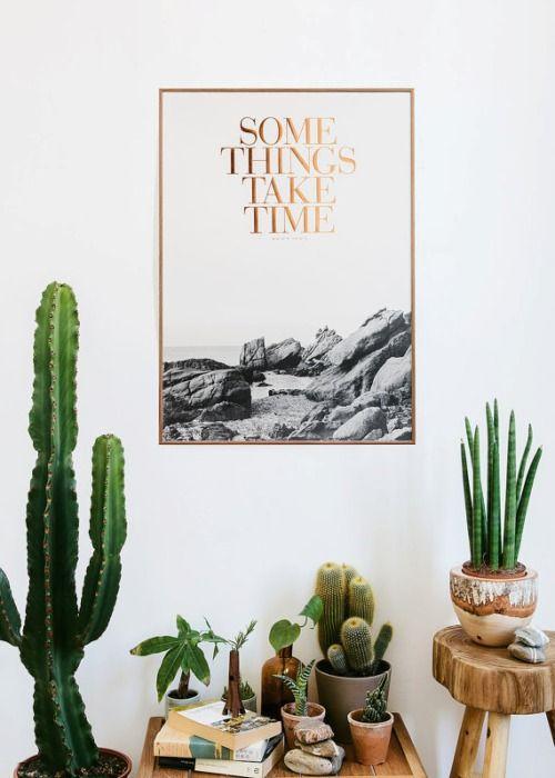 10_cactus-ideas-decoracion-plantas-verdes-tendencias-interiores