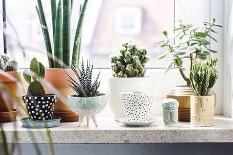 10_macetas-diferentes-plantas-verdes-ideas-decoracion-interiores