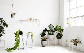 10_maceteros-de-diseno-plantas-annette-obrien-1524394939